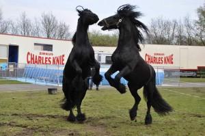 Zirkus-Charles-Knie